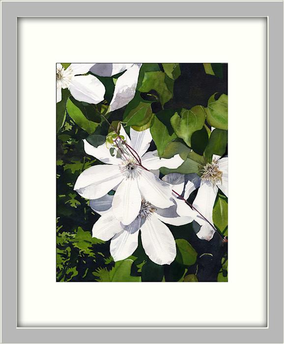 White_clematis_asf_framed_gshbxj