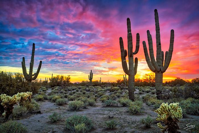 Sunset_serenade_1000px_dawsnm