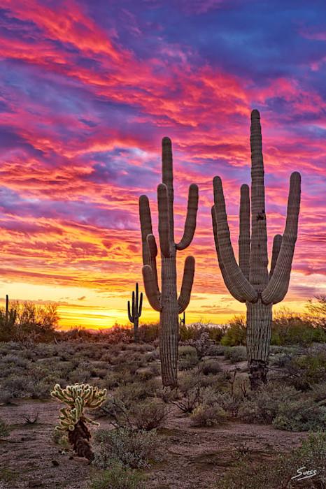 Desert_passion_-_1000px_btdd2e