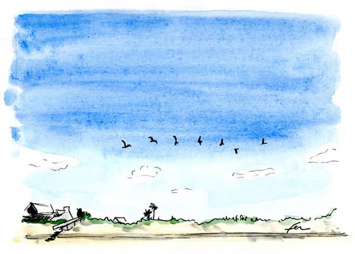 Flockofbirds_taiblg