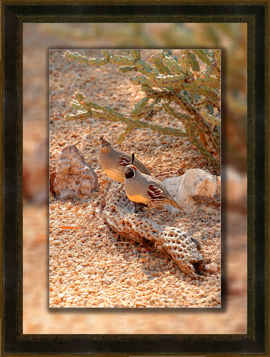 Quail_pair_12x18_to_16x22-leather_swcfbf