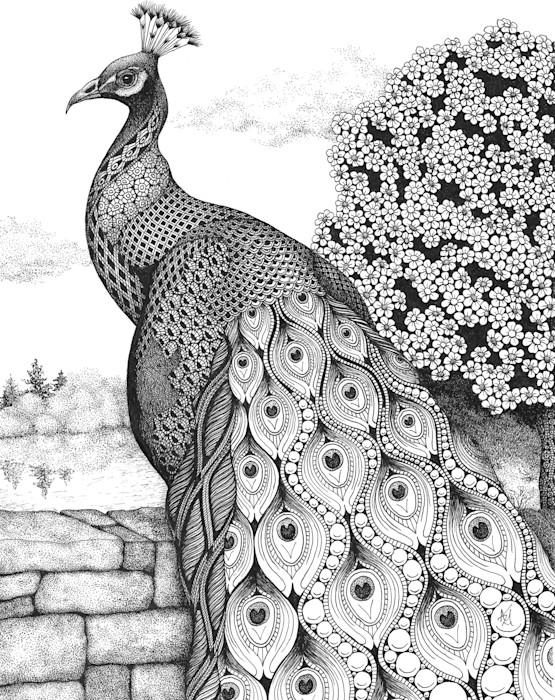 Posh_peacock_rlkveo