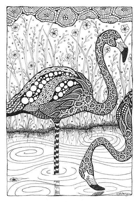 Flamingos_jkhf1y