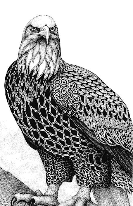 Eagle_bald_eagle_ieidht