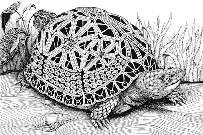 Turtle-_box_turtle_aflnrk