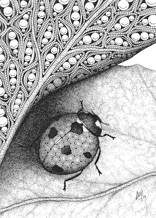 Ladybug2_vpppba