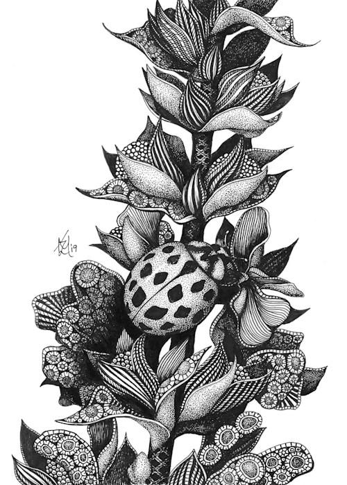 Ladybug_rmsxxp