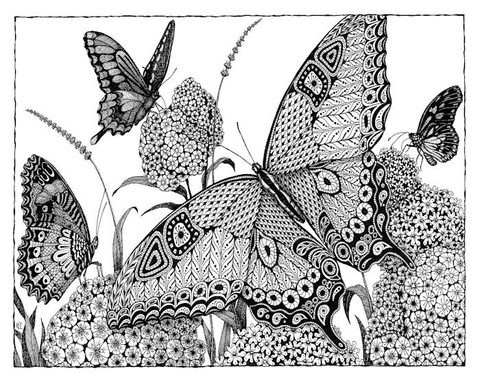 Butterflies_d9rncc