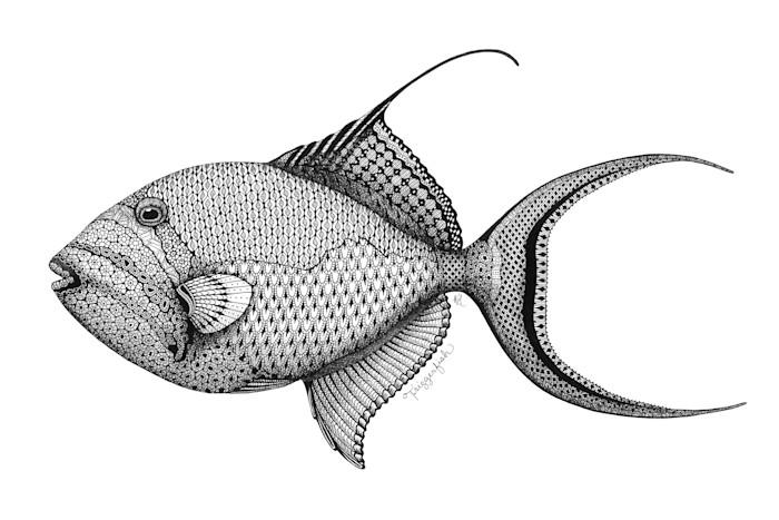Triggerfish_s0ogtf