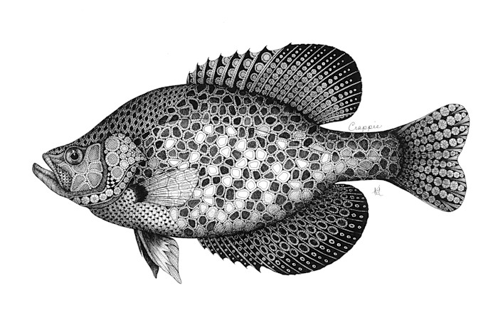 Crappie_pveyp3