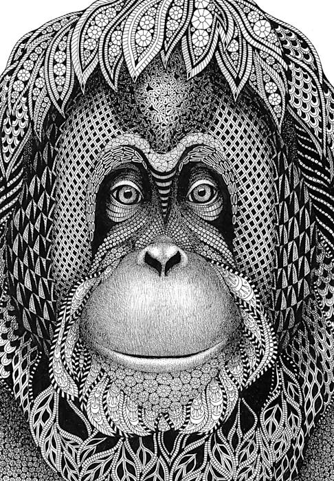 Orangutan-_katie_cropped_tjzpzg