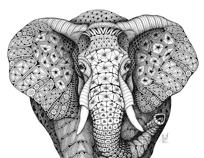 African_elephant_gkoghh