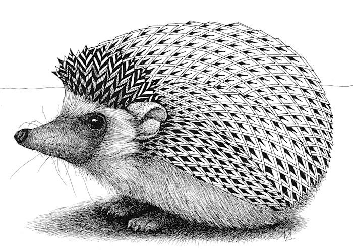 Hedgehog_bov8dz