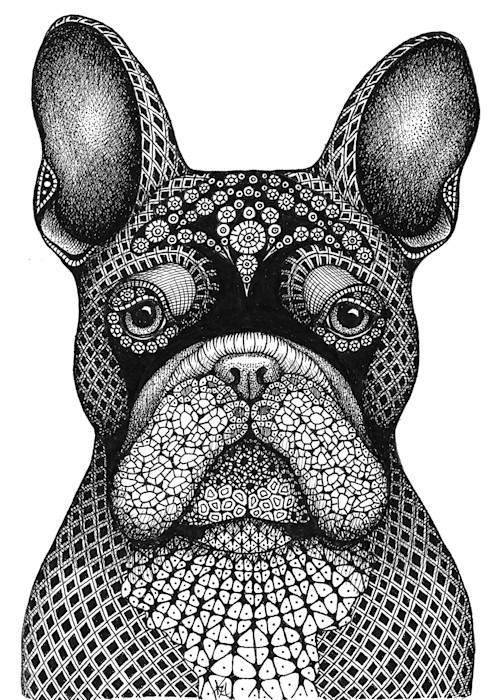 French_bulldog_xuj7v9