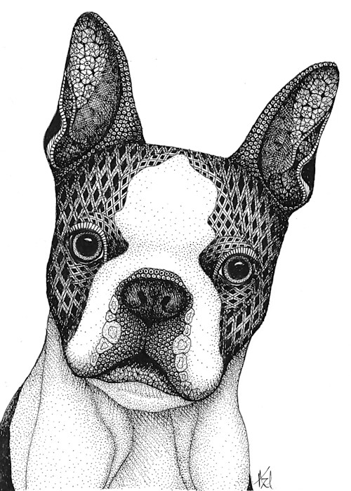 Boston_terrier_wrkqiy