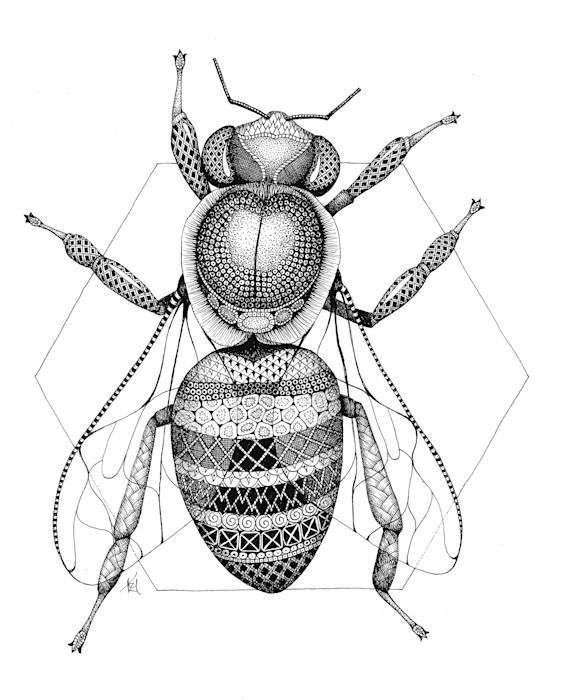 Honeybee_vyp9ob