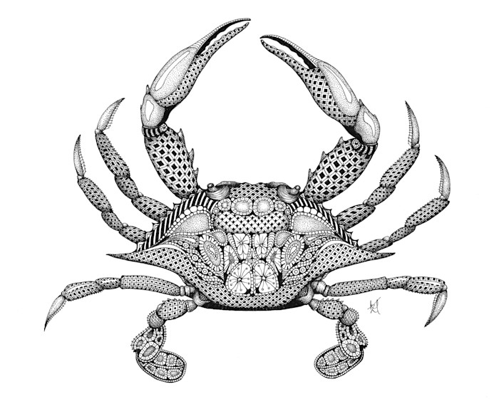 Blue_crab_kkizkx