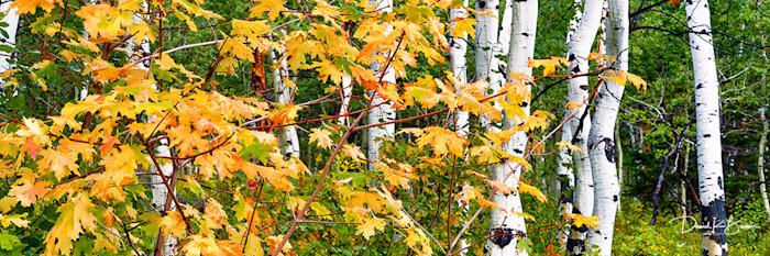 Park-city-fall-1_dlweo5_pqc73l