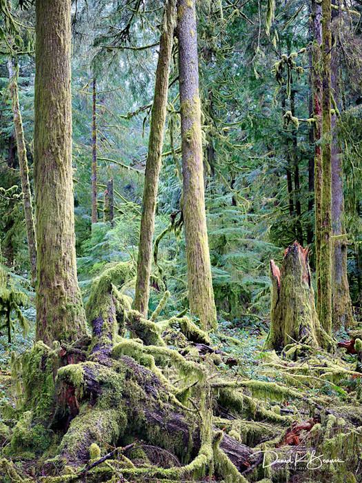 In_the_woods_cyzbfu