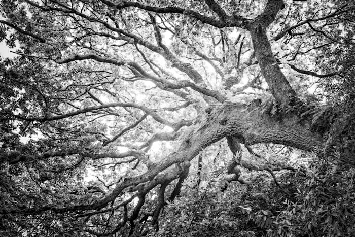 Tree_4b_le_qeywg3