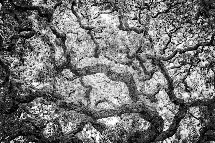 Tree_5_le_w5pdnj