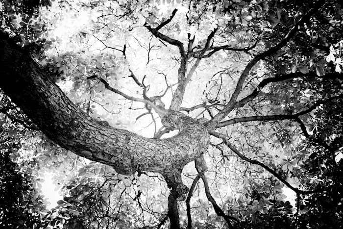 Tree_58_le_bqnotc
