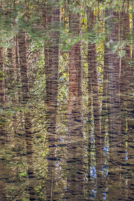 River_bottom_and_pine_reflections_2014_tmu0ff