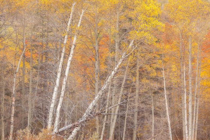 Autumn-tango_poshqb