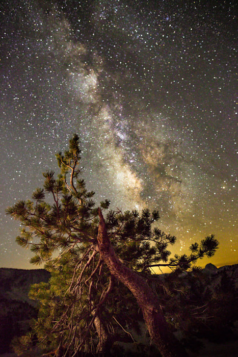 Pine_and_milky_way_tgvwxk