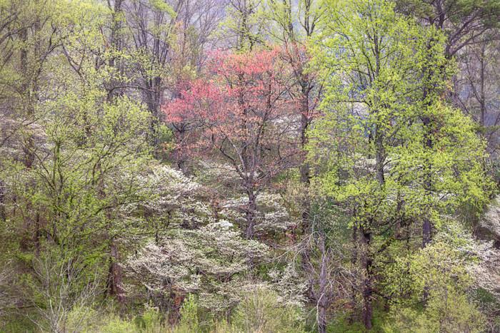 Speaking-of-trees_g3w4yd