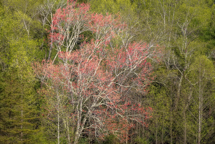 The-red-tree_rdfft5