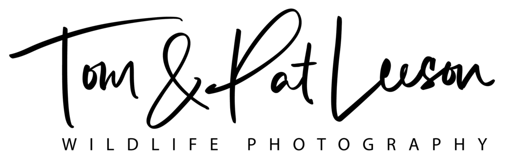 leesonphotoart