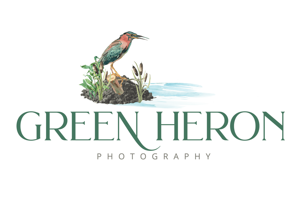 Green Heron Photography