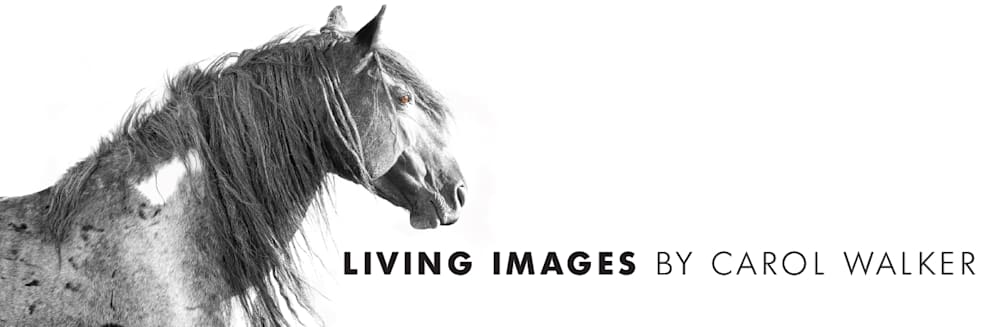 Living Images by Carol Walker