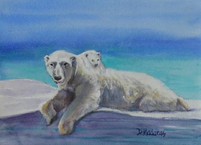 polarbears-fb-wrel5r