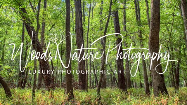 Woods Nature Photography