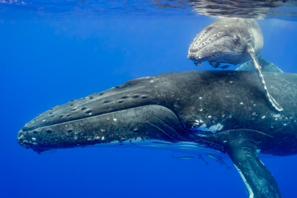 CBPP-20130831-Whale-160-M-M-rncl3p