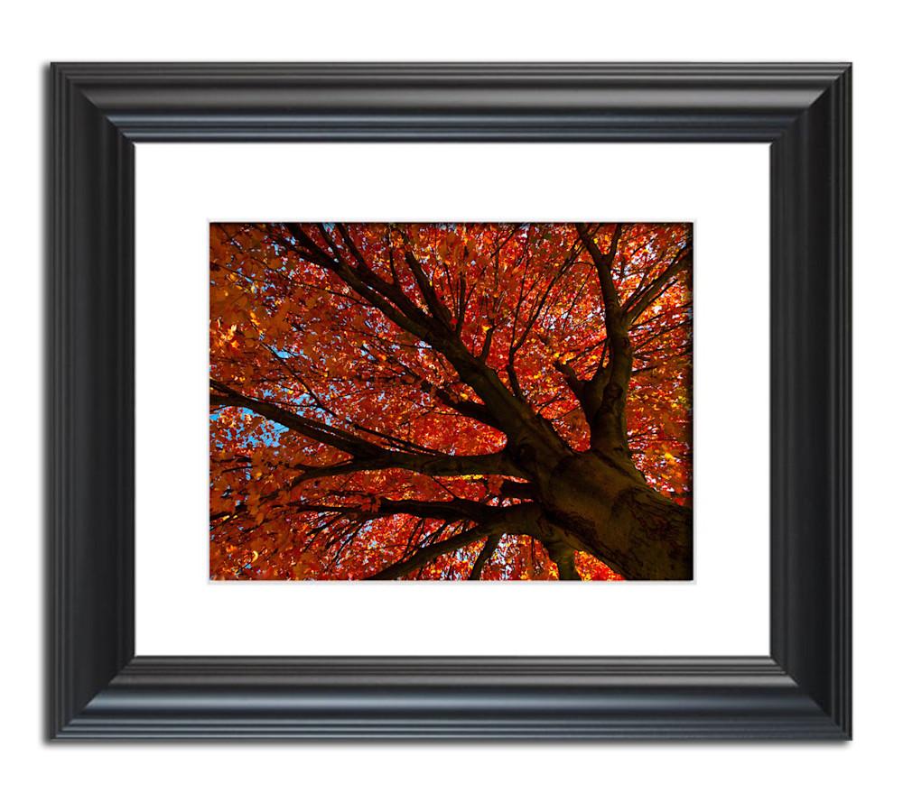 Shimmering-Orange-nature-photograph-framed-example-v5wytg
