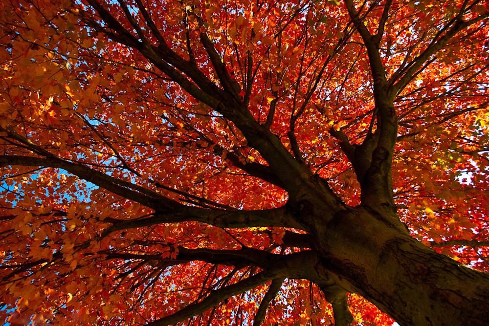 Shimmering-Orange-nature-photograph-vlrwet