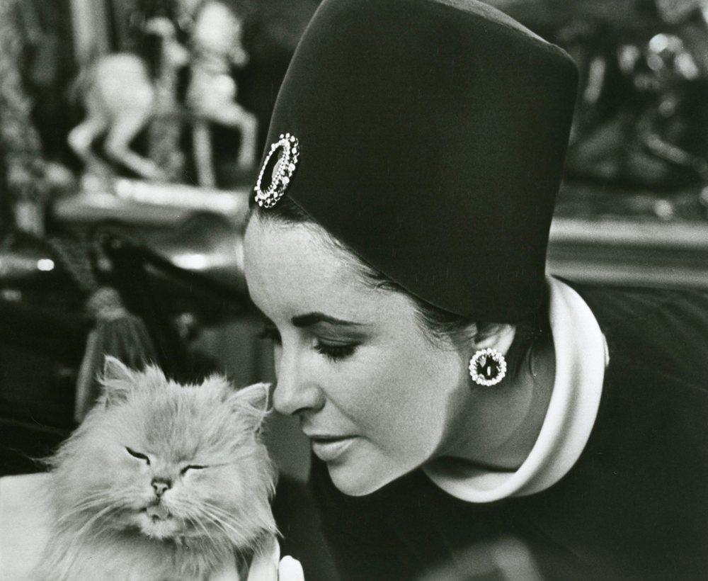 Elizabeth-Taylor-with-kitty--7x9-qiac6t