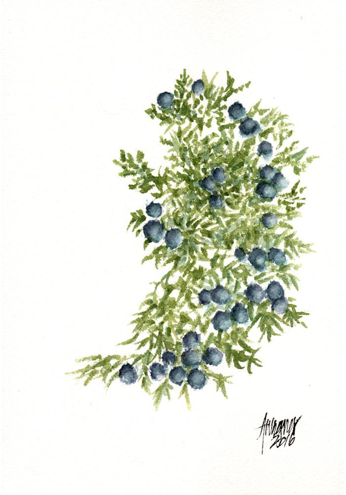 Juniper-berries-Rocky-Gap-Rd-Red-Rock-NP-eu1moi
