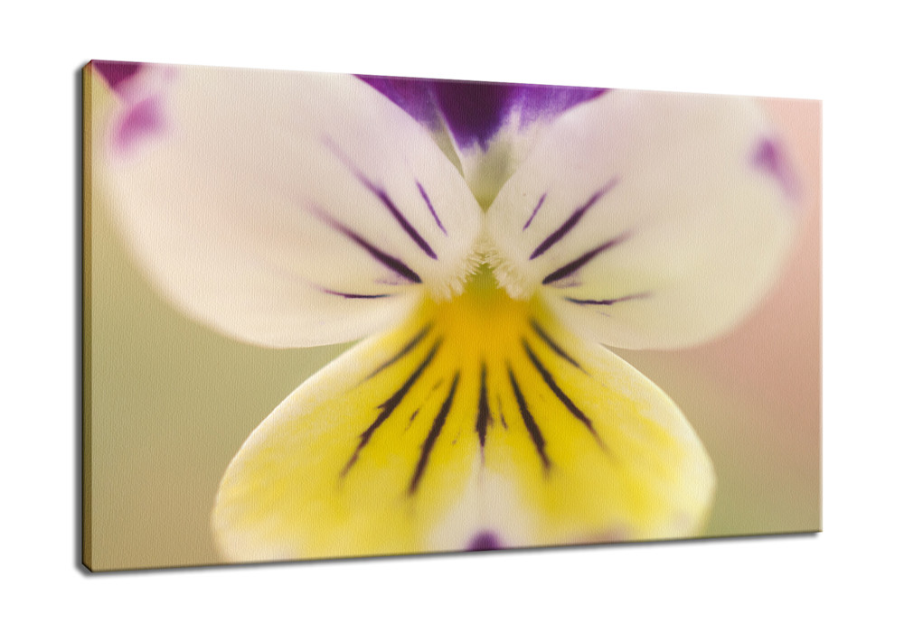 Oh-Violet-Nature-Photography-Canvas-Print-ylkz9h