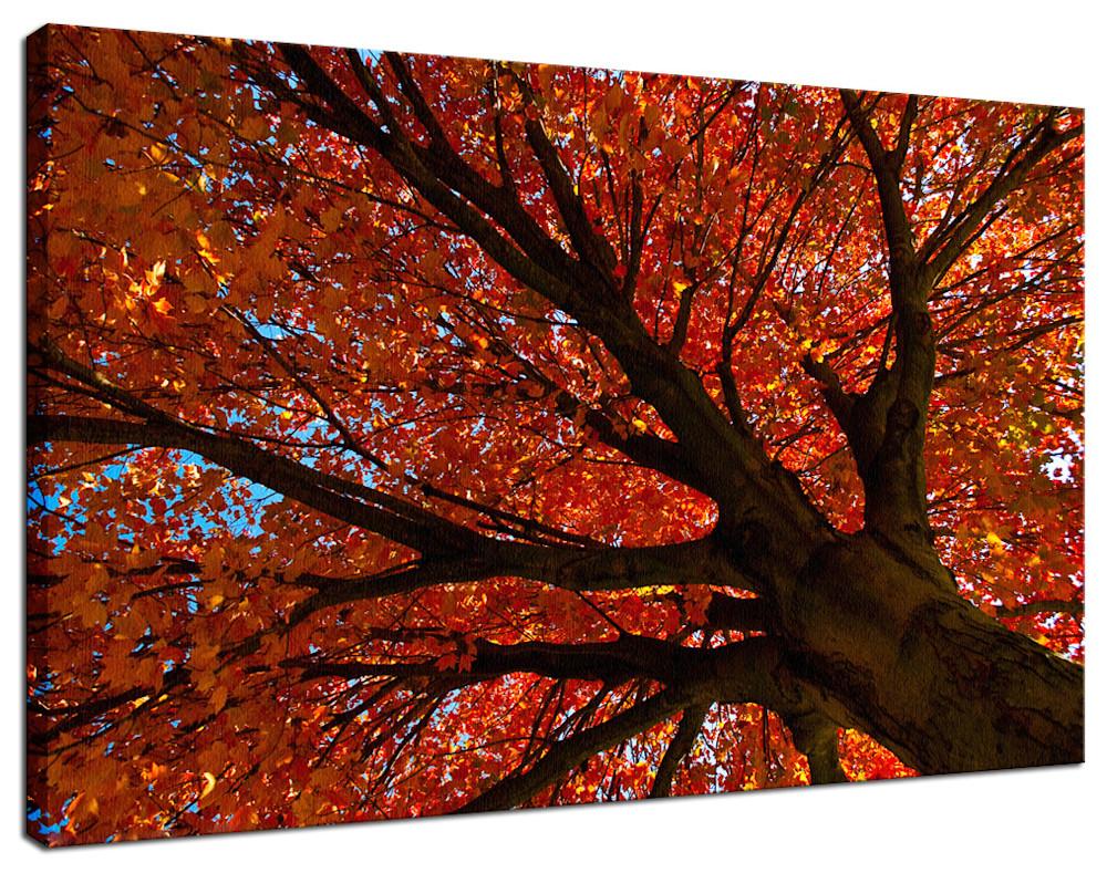 Shimmering-Orange-nature-photograph-canvas-wrap-example-fxznvg