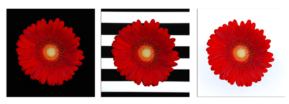 Gerbera-Daisy-Collection-2-kks70p