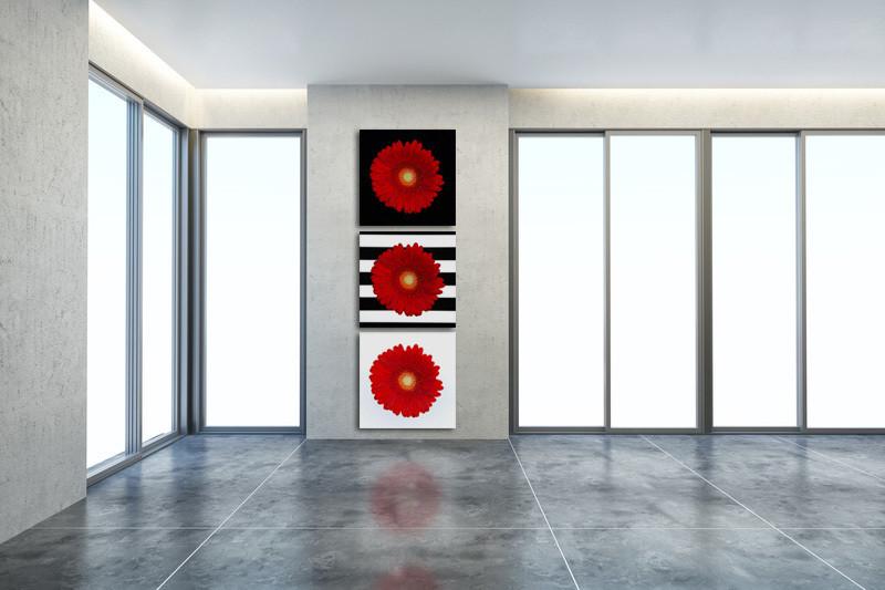 gerbera-Daisy-Collection-Horizontal-mzylrv