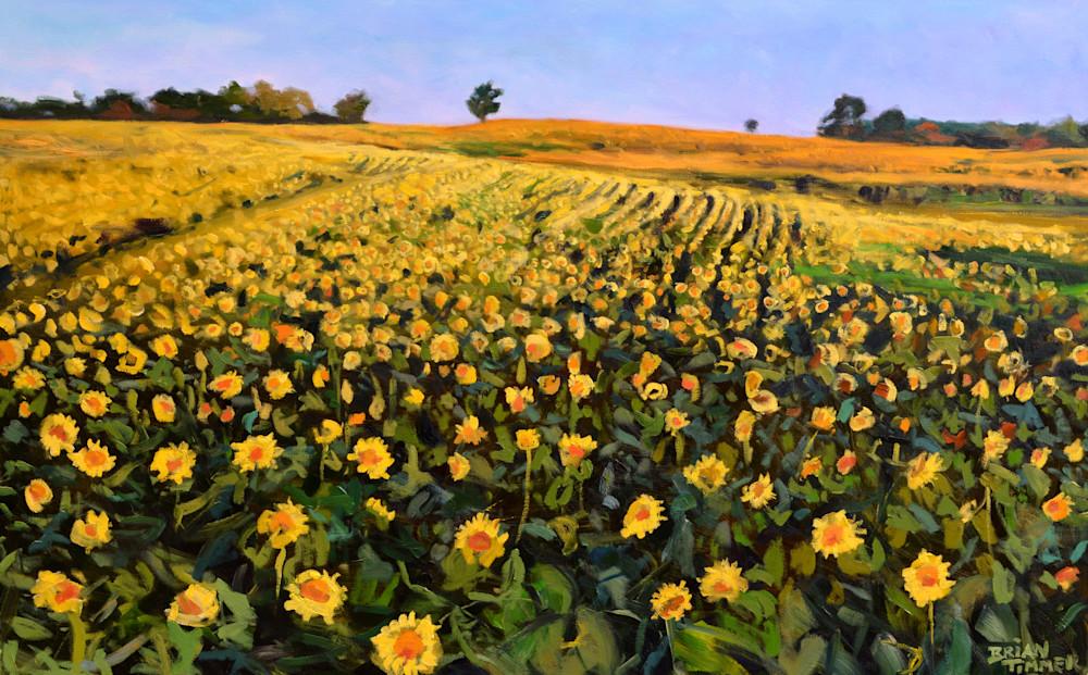 Sunflower-Painting-vdsx7e