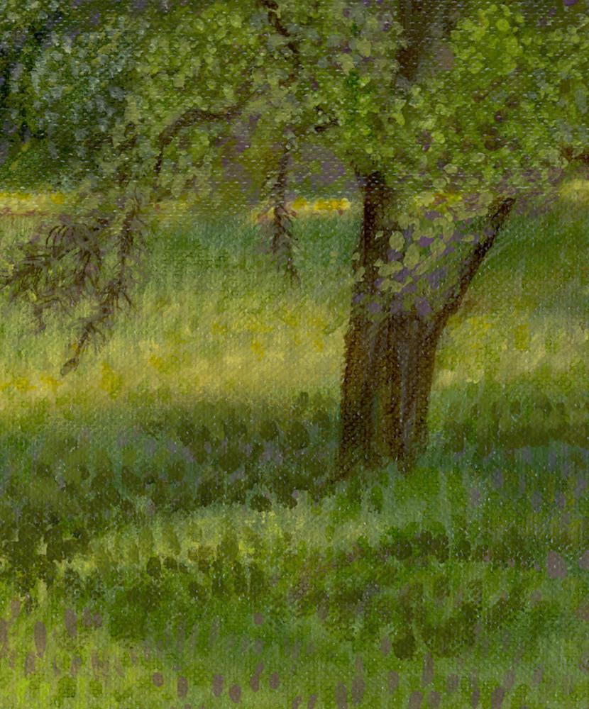 Spring-Mustard-close-up-vztb2f