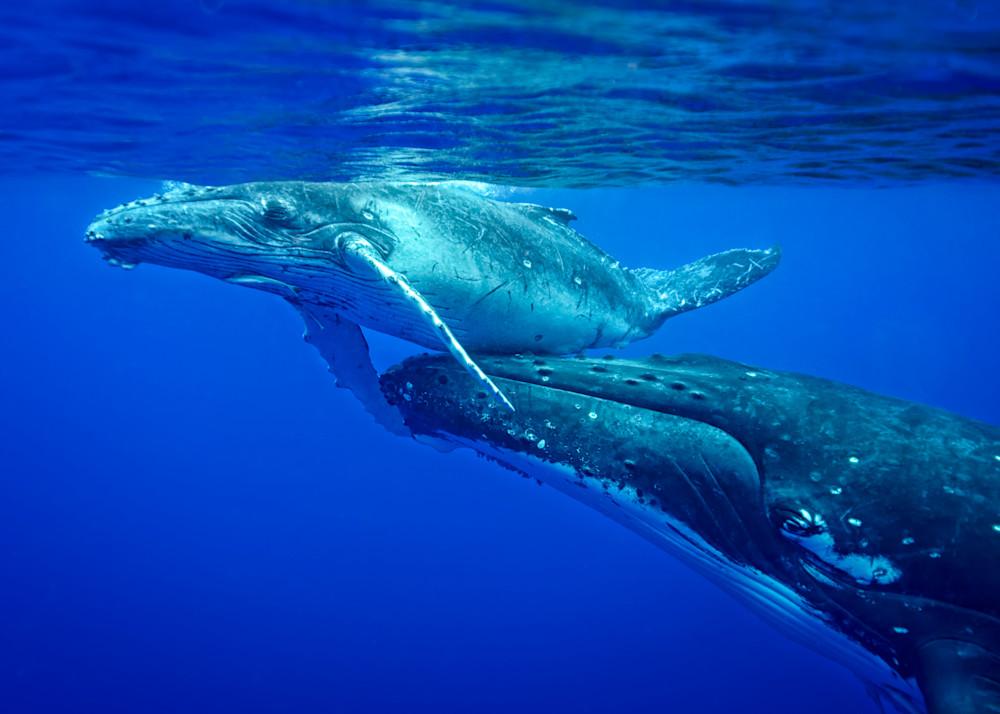 CBPP 20130831 Whale 211 M