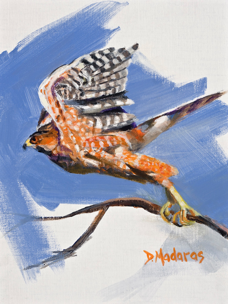 Bird Painting | Southwest Art | Cooper's Hawk by Diana Madaras