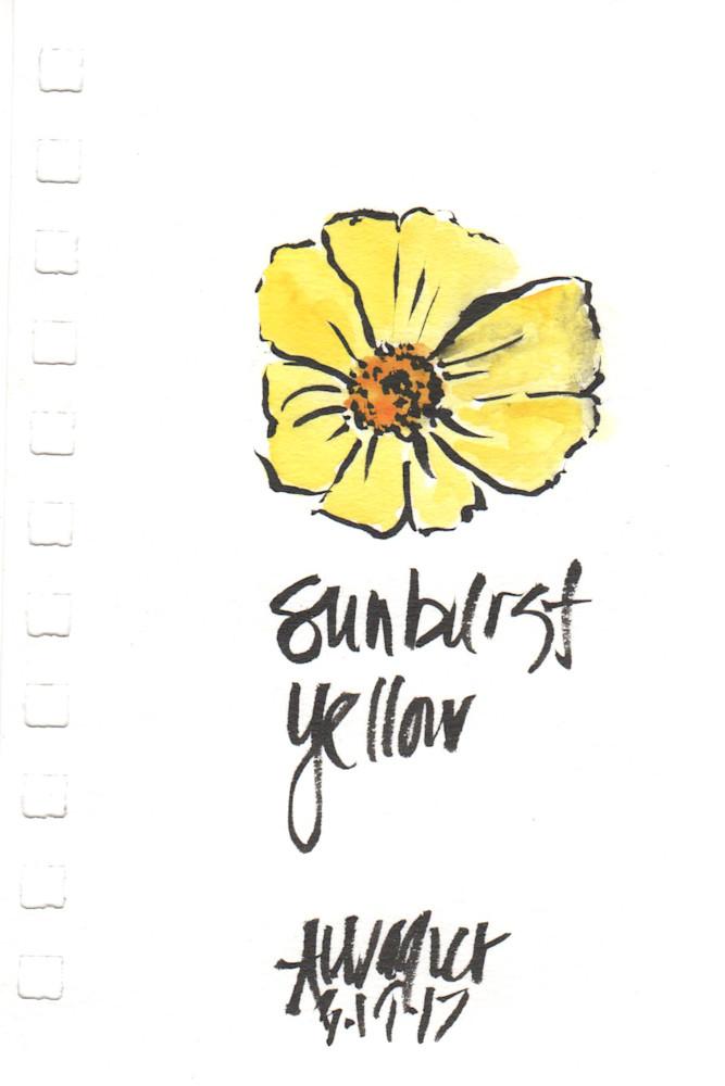 Sunburst yellow daisy